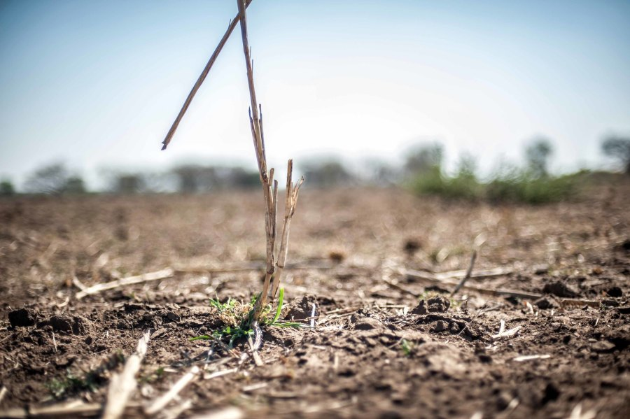 A failed crop due to drought in Mabalane, Mozambique. International Federation of Red Cross and Red Crescent Societies,Flickr