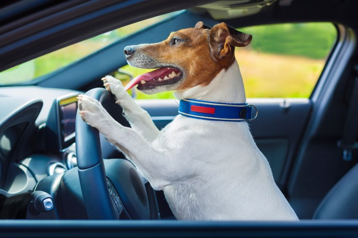 dog driving a steering wheel in a racing car