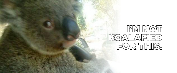 Blog_10CarFacts_Koala