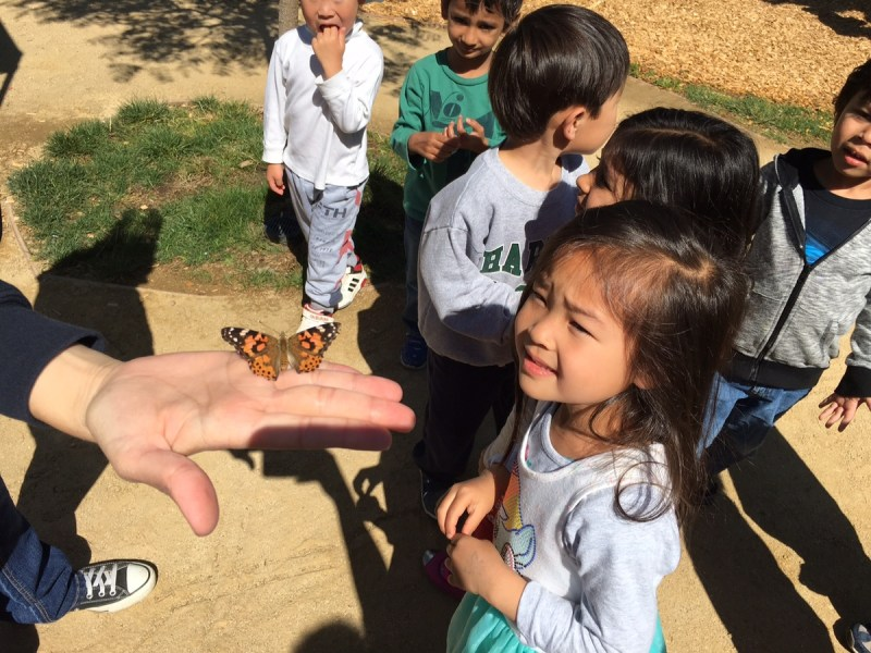 Preschoolers Raise Butterflies and Then Set Them Free