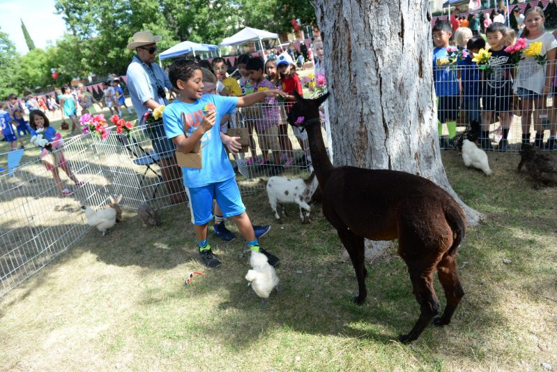 K-3 Students Spend Last Day of School at Farm-Themed Kiddie Carnival!