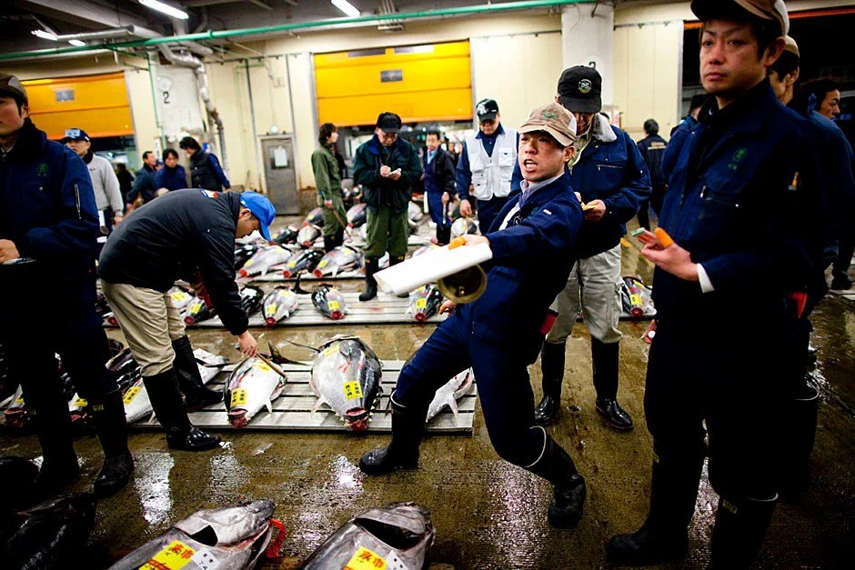 At the Tsukiji Fish Market in Tokyo, an auctioneer calls out rhythmically to entice buyers. Stephanie Mitchell/Harvard Staff Photographer
