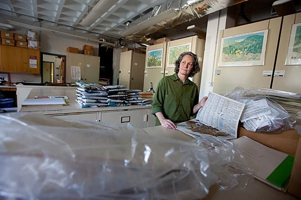 """Last July, Danielle Hanrahan made a big career leap by leaving a world of fine arts at Harvard Art Museums to taking a temporary job at the Harvard Herbaria, mounting new specimens, and was then brought on permanently. """"I decided to jump off the edge of the cliff and see where I was going to land,"""" she said."""