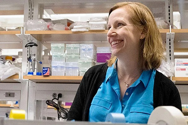 Two former Stanford postdocs, Amy Wagers (pictured), now a professor in Harvard's Department of Stem Cell and Regenerative Biology, and Emmanuelle Passegué, studied why patients with leukemia stop producing healthy blood cells. After almost a decade of bicoastal collaboration, they have an answer.