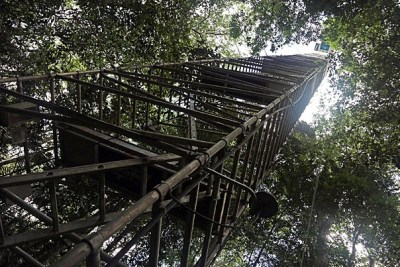Deep in Brazil's Amazon rainforest, Harvard Professor Scot Martin studies air pollution from atop a 177-foot aluminum tower. Though scientists have long understood the impact of carbon dioxide and methane gas on global warming, they know relatively little about the particles that Martin studies, or their possible influence on climate shifts and global warming trends.