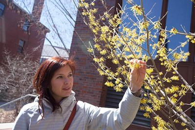 """""""I wanted to create something that made herbal medicine accessible,"""" said Steph Zabel, a curatorial assistant at the Harvard Herbarium and founder of Herbstalk, a two-day educational festival based in Somerville that features classes on how to use herbs and plants, like hazel blossoms, seen here."""