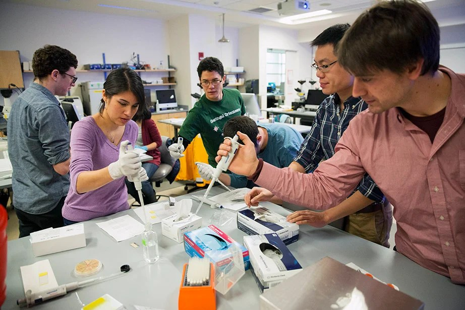 GSAS student Denise Sirias (from left) practices biological and biomedical science with Ph.D. hopeful Chris Baker and GSAS students Allen Lin and Max Schubert during the MSI Graduate Consortium, a weeklong intensive workshop offered during Harvard's January session. Kris Snibbe/Harvard Staff Photographer