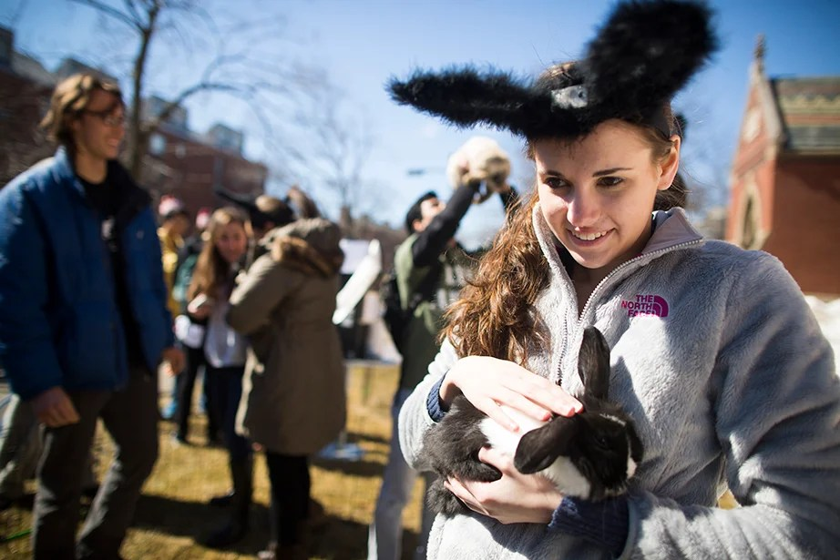 Stephanie Ferrarie '18, a newly-minted Leverett House resident, pats one of the House's bunny mascots outside of Annenberg Hall. Stephanie Mitchell/Harvard Staff Photographer