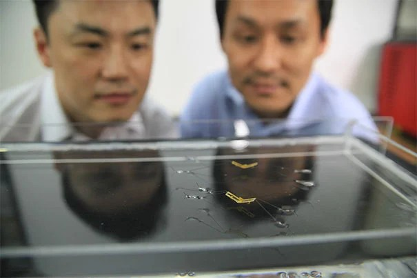 Seoul National University (SNU) professors Ho-Young Kim (from left) and Kyu-Jin Cho watch the semi-aquatic jumping robotic insects developed by a team from SNU and Harvard.