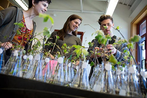 """""""Will spring just keep getting three weeks earlier every three decades? Or will there be a point where we will really have messed up the biology of these systems and the plants won't be able to track with climate change because there's this photo-period limit?"""" asked Elizabeth Wolkovich (center), an assistant professor of organismic and evolutionary biology. Working with Wolkovich were research technicians Jehane Samaha (left) and Tim Savas."""