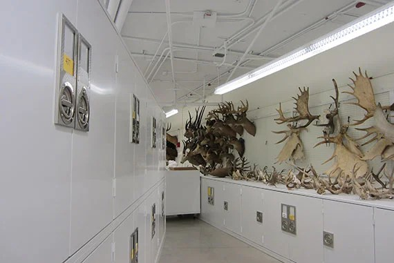 More than six million zoological specimens are now housed in a state-of-the-art LEED Platinum laboratory and workspace facility for the Museum of Comparative Zoology (MCZ).]
