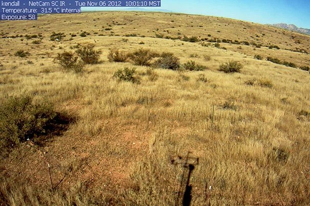"""To understand the effects of climate change on grasslands, researchers created a model of both the hydrology and vegetation of the region, then """"trained"""" it using present-day data gathered from the PhenoCam Network, a collection of 250 Internet-connected cameras that capture images of local vegetation conditions and greenness every half hour."""