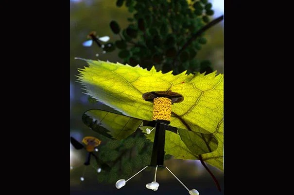 An electrode patch that uses static electricity allows the RoboBee to attach itself to a leaf. Right now, the RoboBee can only perch under overhangs and on ceilings, as the electrostatic patch is attached to the top of the vehicle.