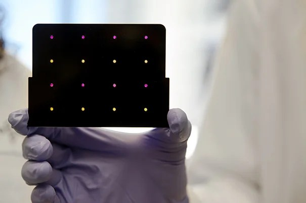 A black cartridge containing a paper-based diagnostic for detecting the Zika virus is held up by a researcher at Harvard's Wyss Institute. Areas that turn purple indicate samples infected with Zika, while yellow areas indicate samples that are free of the virus.