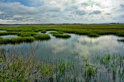 Salt marshes provide a natural barrier of coastal protection along Georgia's shoreline.