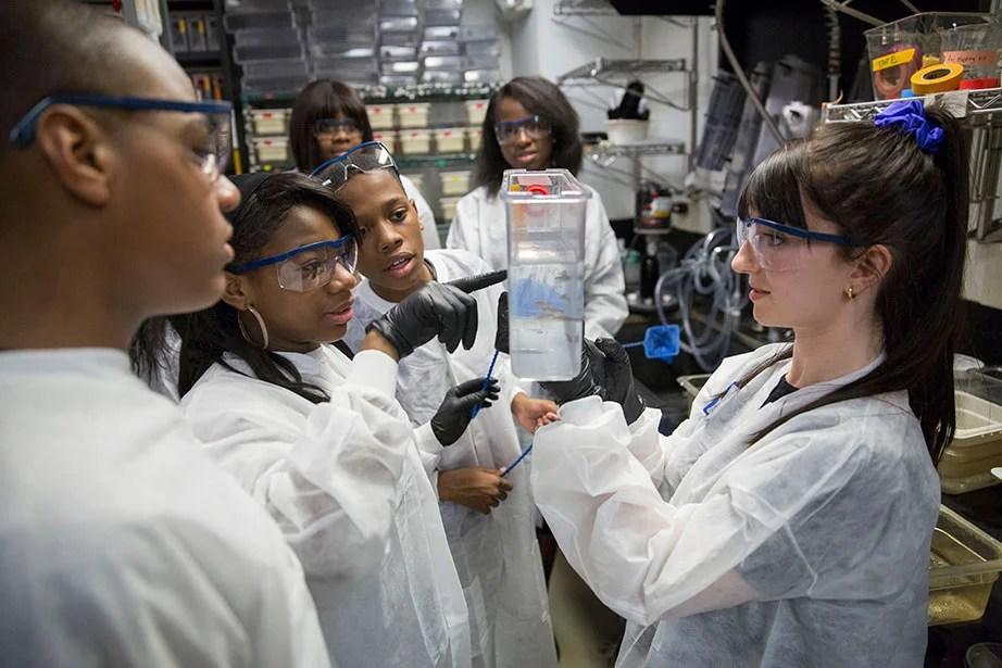 At Harvard's biology labs, students from Mott Hall Bridges Academy in Brooklyn, N.Y., learn how zebrafish are used in scientific research to study embryonic development. With Jermont Haines (from left), Tukoya Boone, Aaron Abdulmalik, and Zion Edwards was Bianca Nfonoyim '15 (background). Tessa Montague, a student from the Graduate School of Arts and Sciences, also led the tour. President Faust met and spoke with students during their visit to campus in April 2015, encouraging them to pursue a path toward college. Kris Snibbe/Harvard Staff Photographer