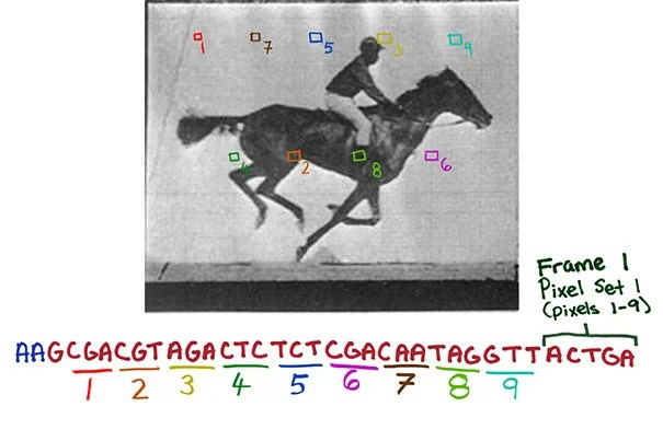 CRISPR system-based technology lets researchers record digital data — such as successive frames of a movie of a galloping horse — in a population of living bacteria. This could eventually have cells record the key changes they undergo during development or exposure to environmental or pathogenic signals.