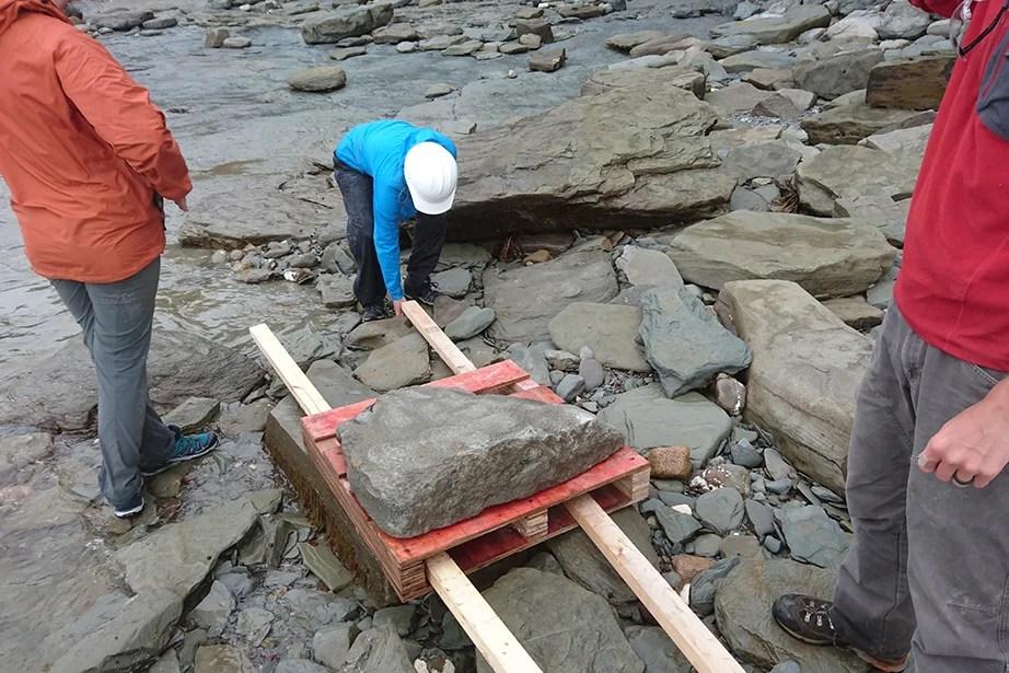 A Harvard paleontology team prepares to move a heavy fossil across a rocky beach in Nova Scotia.