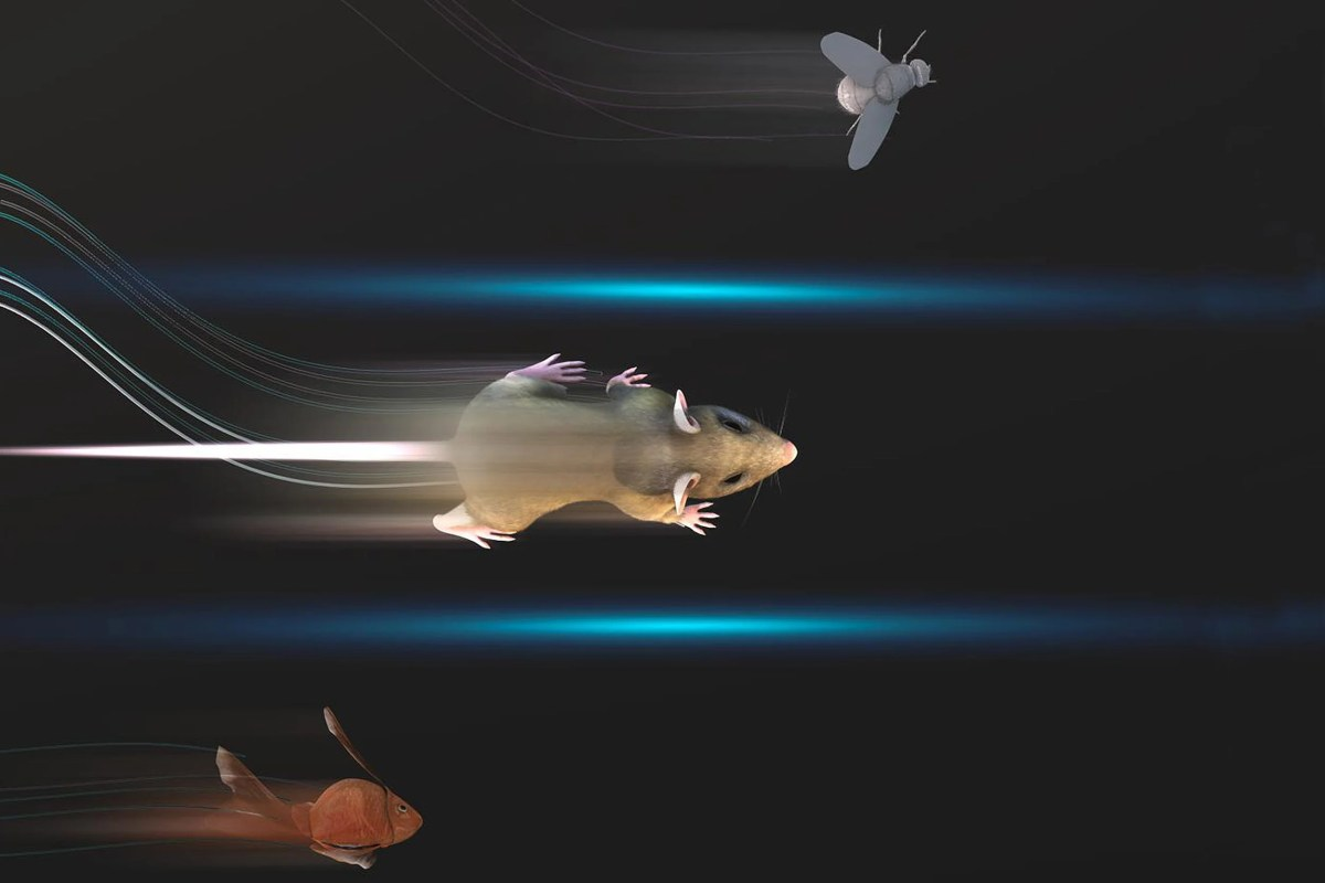 Rendering of lab animals moving.