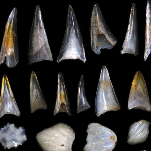 Fish teeth