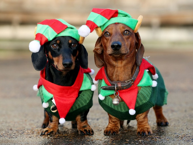 Image of: Photoshoot Hundreds Of Sausage Dogs And Owners Dress Up For Hyde Park Christmas Walk Plenty Gifts Hundreds Of Sausage Dogs And Owners Dress Up For Hyde Park
