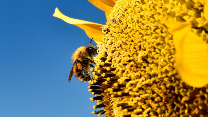 The neonicotinoid pesticides are thought to be harmful to bees