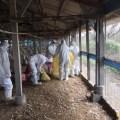 Последние вспышки птичьего гриппа в уезде Юньлинь на Тайване