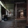Запрет на поедание кошек и собак на Тайване