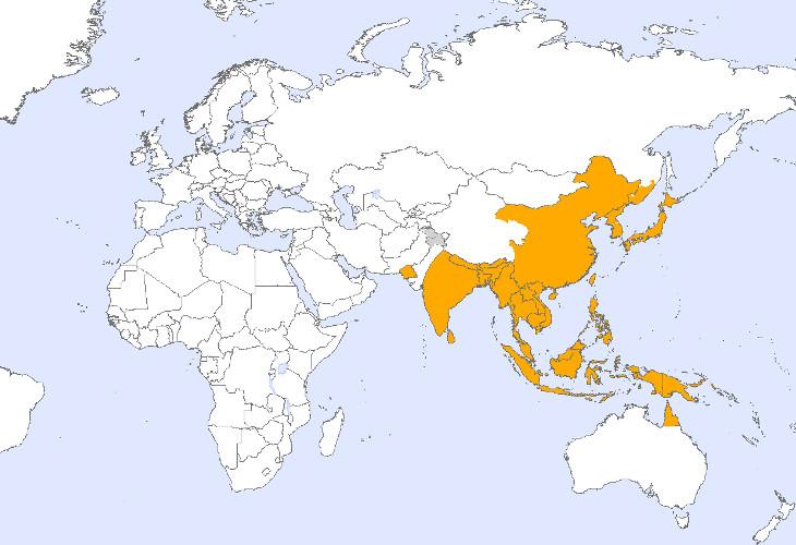 Японский энцефалит свирепствует на Тайване