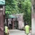 Сбежавшая шимпанзе посеяла панику в Тайбэйском зоопарке