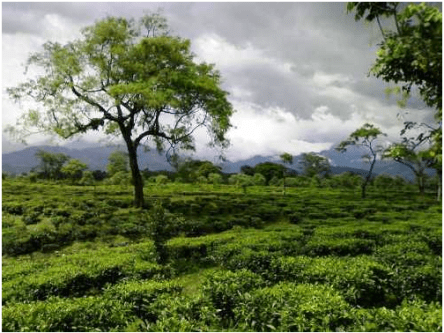 TOURIST PLACES TO VISIT IN WEST BENGAL