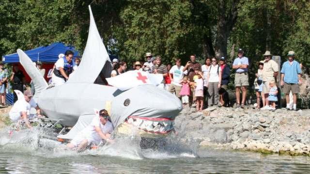 Kinetics Shark
