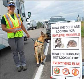 Mollusk Sniffer Dogs