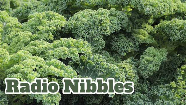 Radio Nibbles Kale