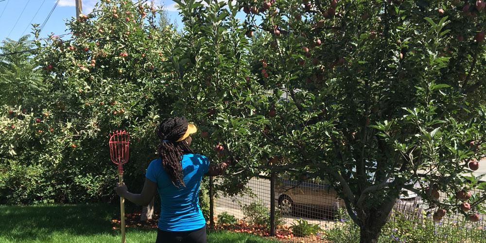 Fruit Rescue