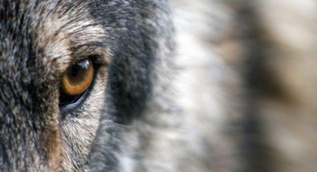 Colorado Endangered Species Week