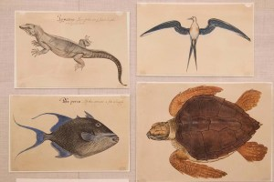 Drawings of a lizard, fish, tern, and sea turtle