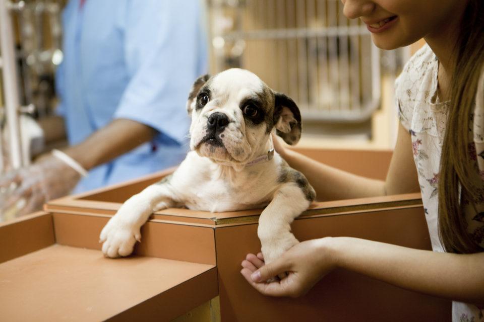 At animal adoption center