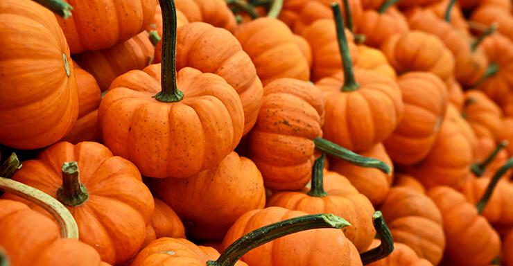 pumpkinsfi