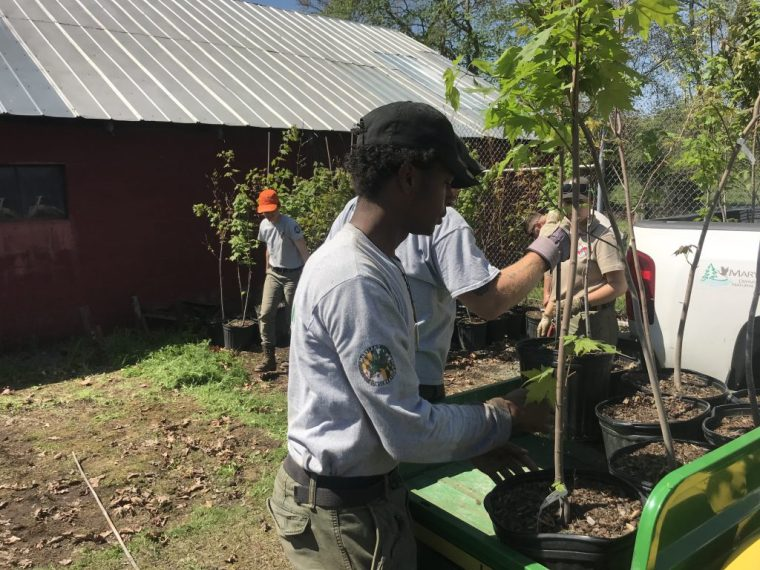 Photo of corps member with trees