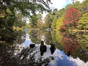 Pocomoke River State Park photo by Christina Holden