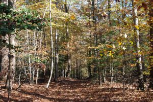 Photo of forested land on Egolf property in Anne Arundel County