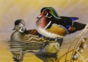 """Illustration of wood ducks,""""The Resting Place"""" by Gerald Putt, of Boiling Springs, Pa, winner of the 45th Annual Maryland Migratory Game Bird Stamp Design Contest."""