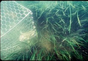 Photo of bay grasses