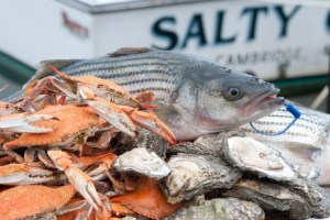 Image of Maryland Seafood: Rockfish, Crabs and Oysters