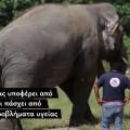 Ελπίδα για τον πιο «μοναχικό ελέφαντα» του κόσμου… Ξεκινά μια νέα ζωή