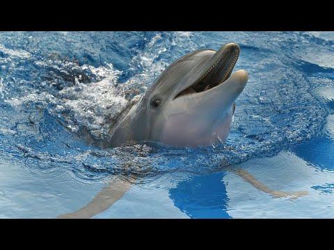 WWF: Κάμερες στα αλιευτικά για να σωθούν τα δελφίνια