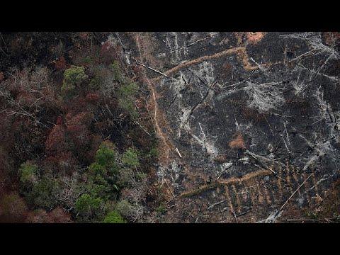 Κλιματική Αλλαγή: Ο Αμαζόνιος εκπέμπει περισσότερο διοξείδιο του άνθρακα απ' όσο απορροφά…