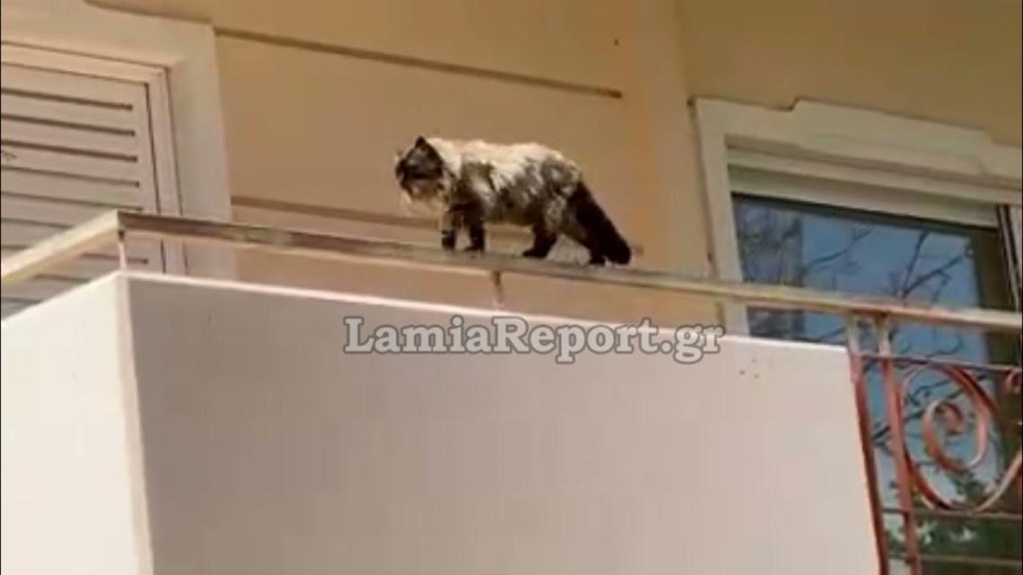 LamiaReport.gr: Γατούλης, μέσα στα νεύρα, κόβει βόλτες πάνω στα κάγκελα 2ου ορόφου