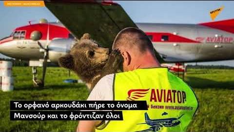 O αρκούδος που ζει σε αεροδρόμιο: Ρώσοι πιλότοι βρήκαν ορφανό αρκουδάκι στο δάσος και το υιοθέτησαν